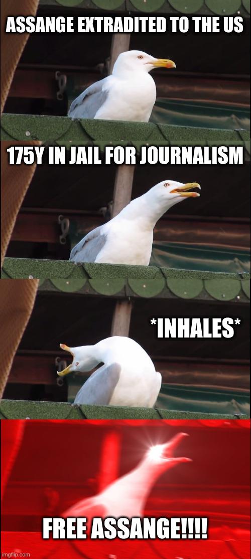 seagullinhales.jpeg