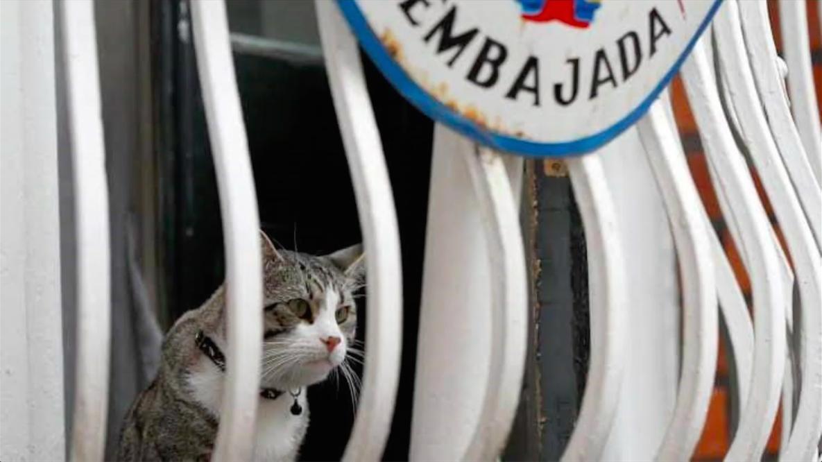embajada-cat.png