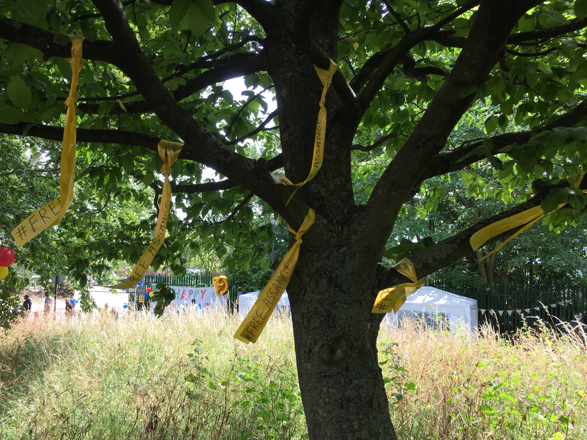 yel-ribs-tree.jpg